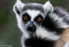 nature_madagascar56.jpg
