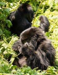 nature_rwanda1.jpg