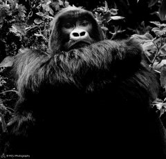 nature_rwanda13.jpg