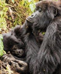 nature_rwanda17.jpg