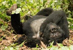 nature_rwanda24.jpg