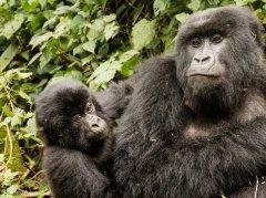 nature_rwanda30.jpg