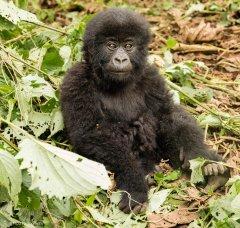 nature_rwanda32.jpg