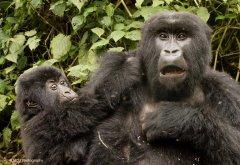 nature_rwanda33.jpg