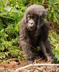 nature_rwanda9.jpg